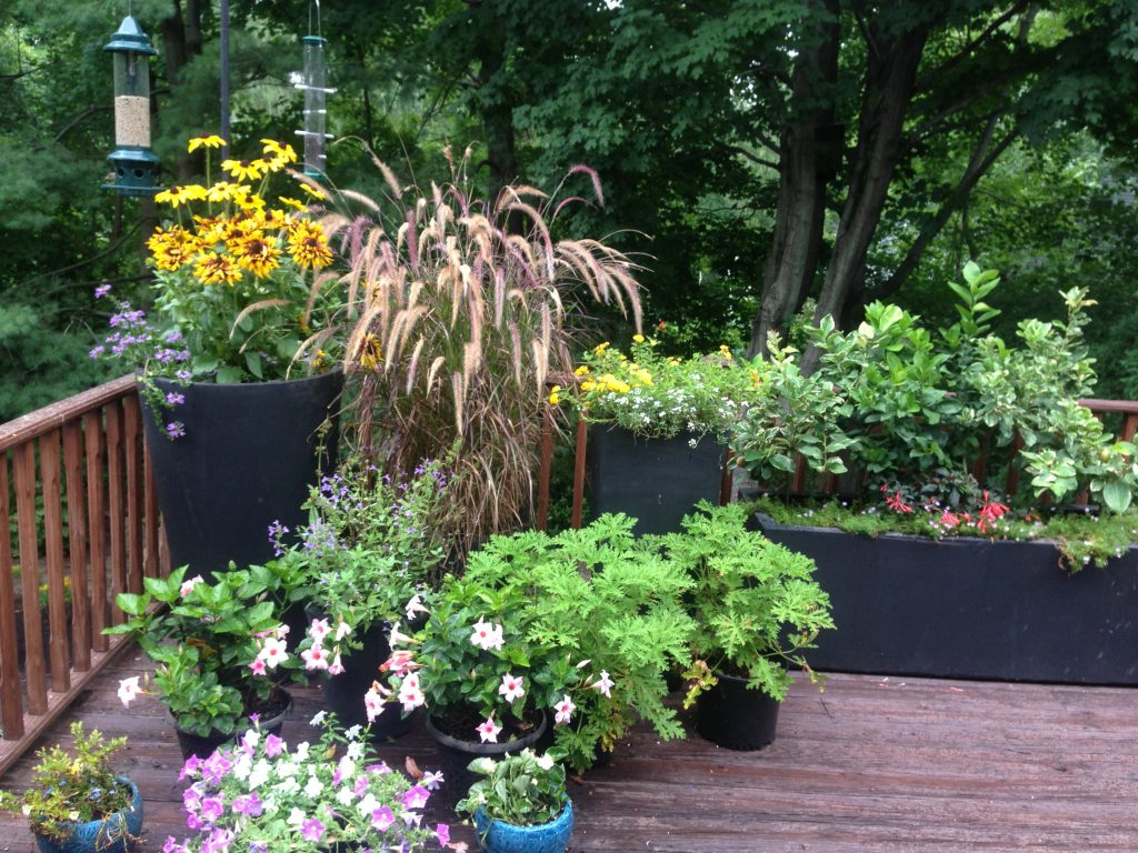 Container Gardening Ideas – White Plains NY