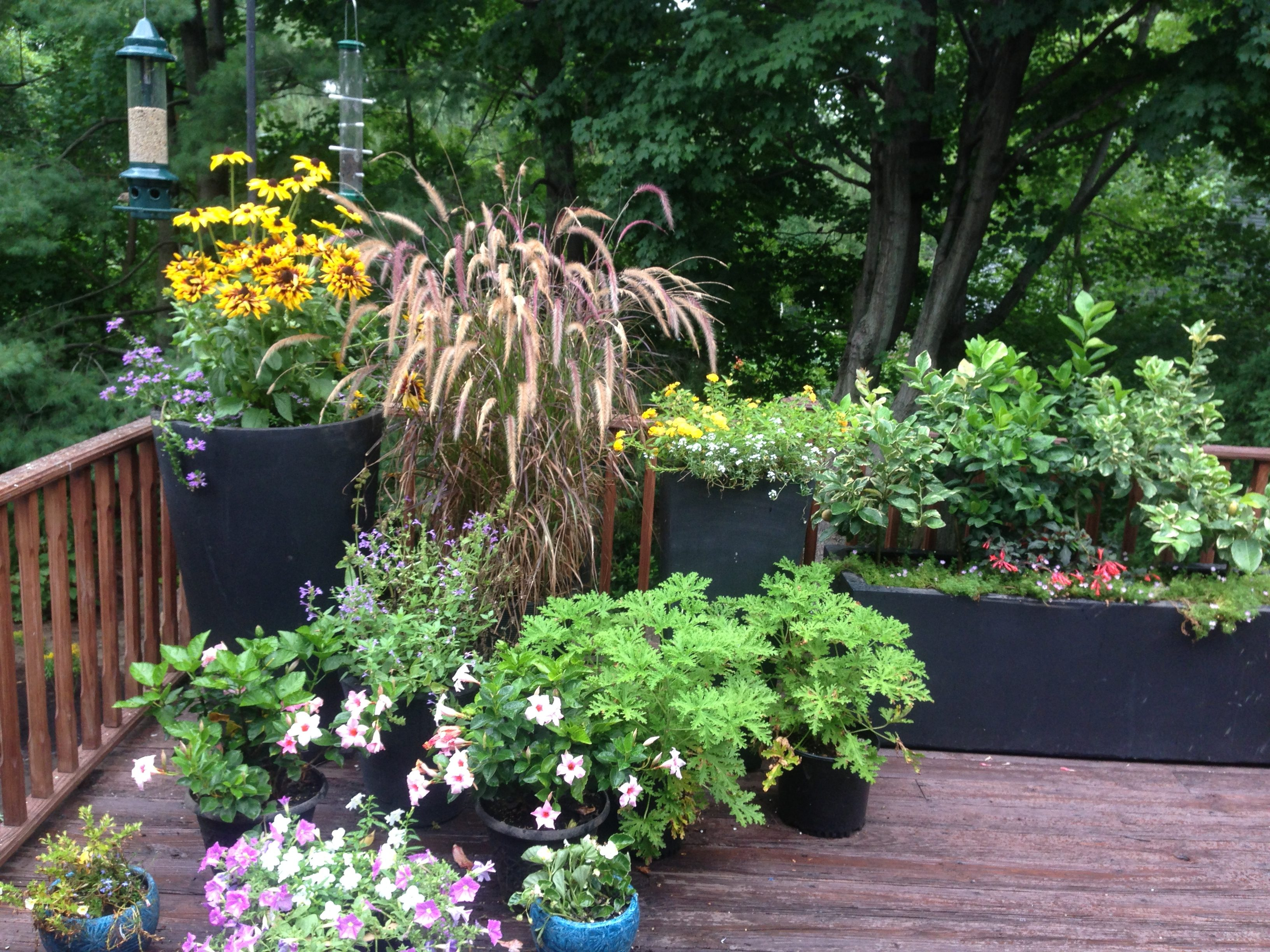Container Gardening Ideas White Plains Ny Green Jay Landscaping