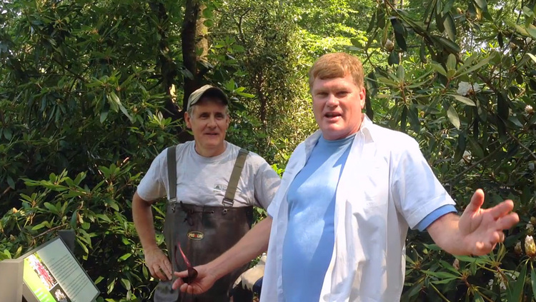 Wetland Landscaping Ideas – Westchester, Putnam and Fairfield Counties
