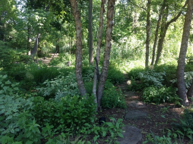 Native Plants and Landscaping for Pollinators