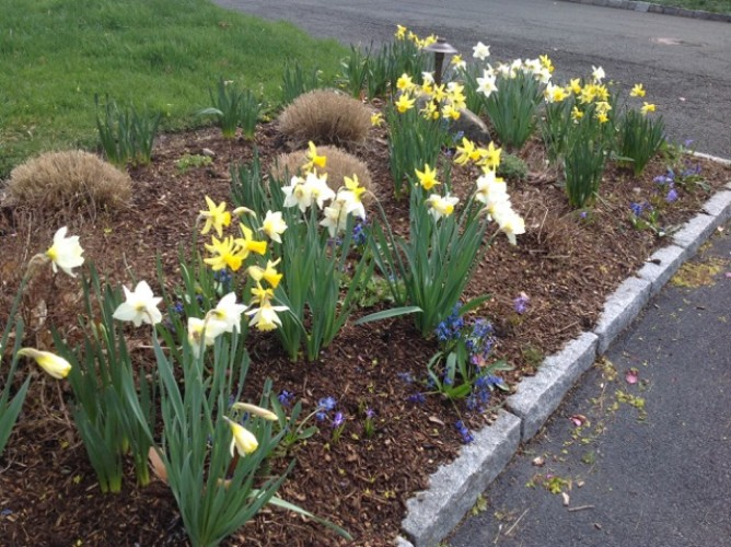 Landscape Design and Spring Flowering Bulbs – Westchester County