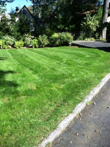 Lawn Maintenance in Rye: How Do You Maintain Your Lawn?