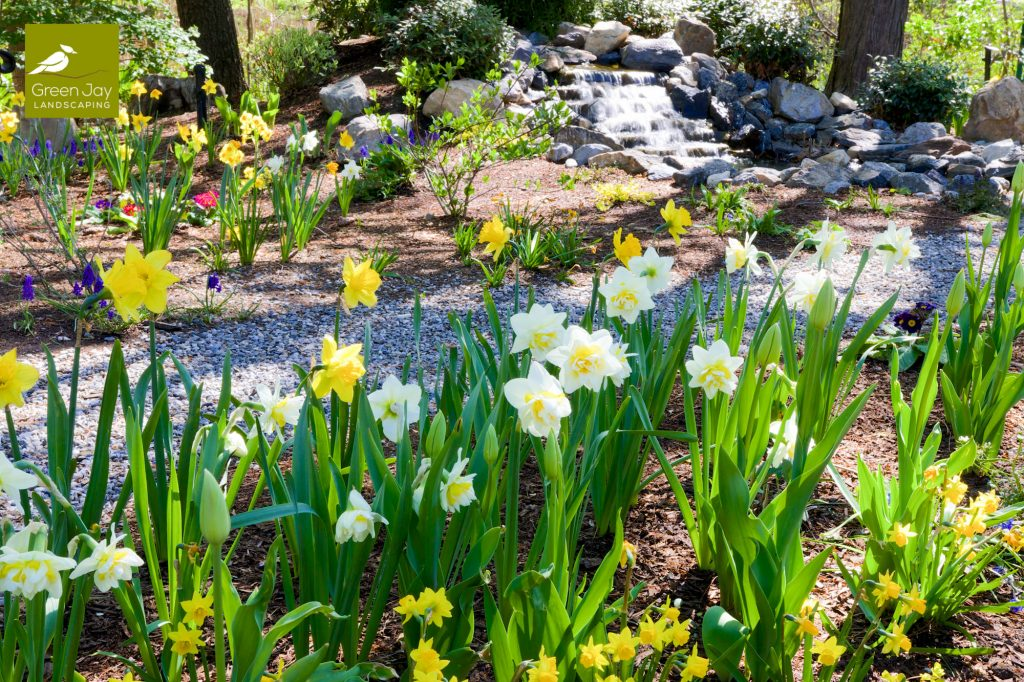 Don't Miss Bulb Season! GJL's Guide to Designing with Spring Bulbs