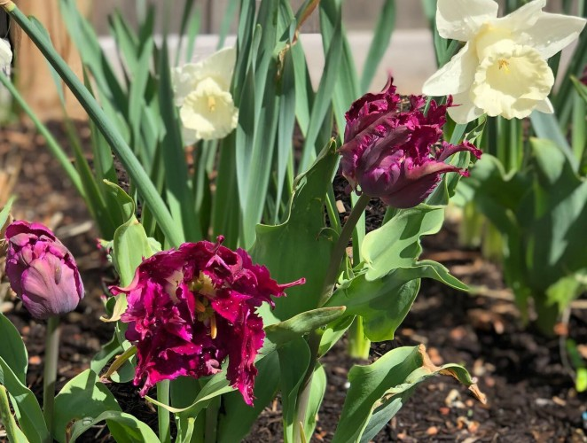 Fall Landscape To Do List: PLANT SPRING FLOWERING BULBS!
