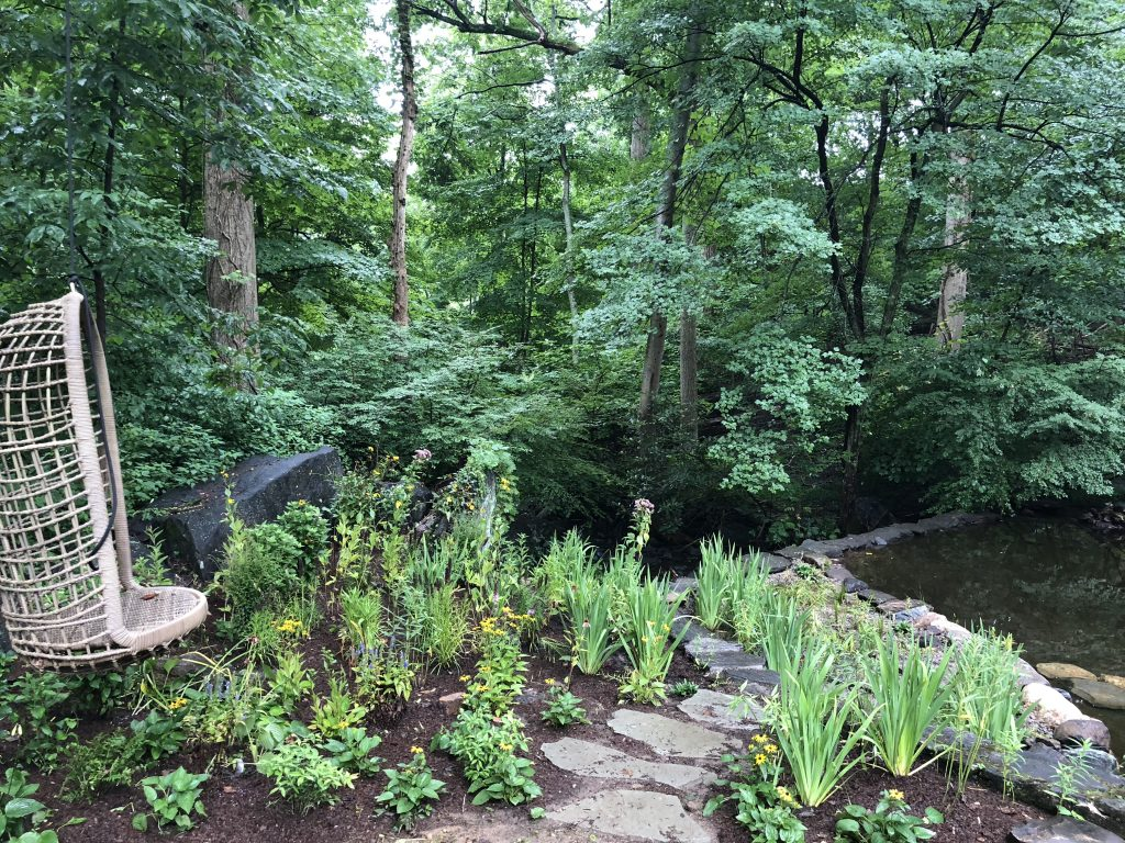 Pond Restoration & Native Bog Garden in White Plains