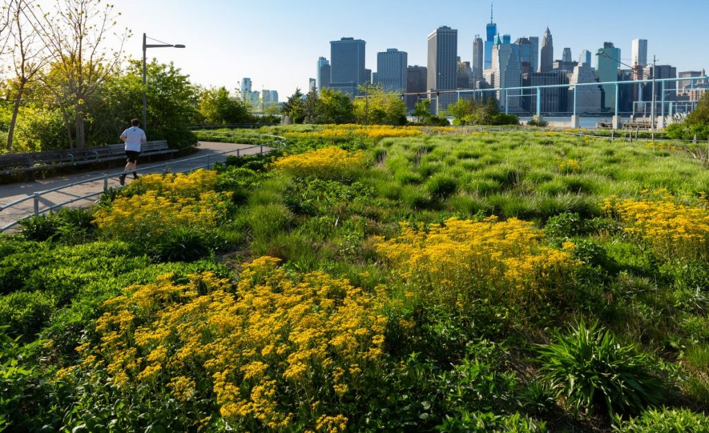 Brooklyn Bridge Park is a Model of Ecological Landscape Design | Director Rebecca McMackin Shares at Plant-O-Rama