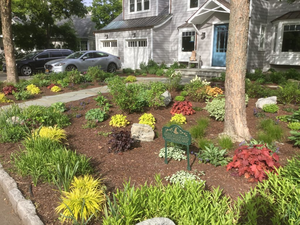 Front Yard Native Garden & Bluestone Walkway, Lawn Replacement | Larchmont, NY