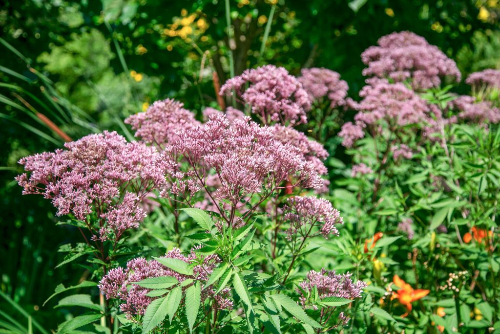 Natural, Organic Landscaping   Fairfield & Westchester County