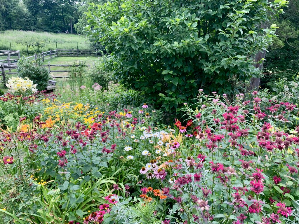 Creating Bird and Pollinator Habitat at Home with Native Plants | Westchester & Fairfield County