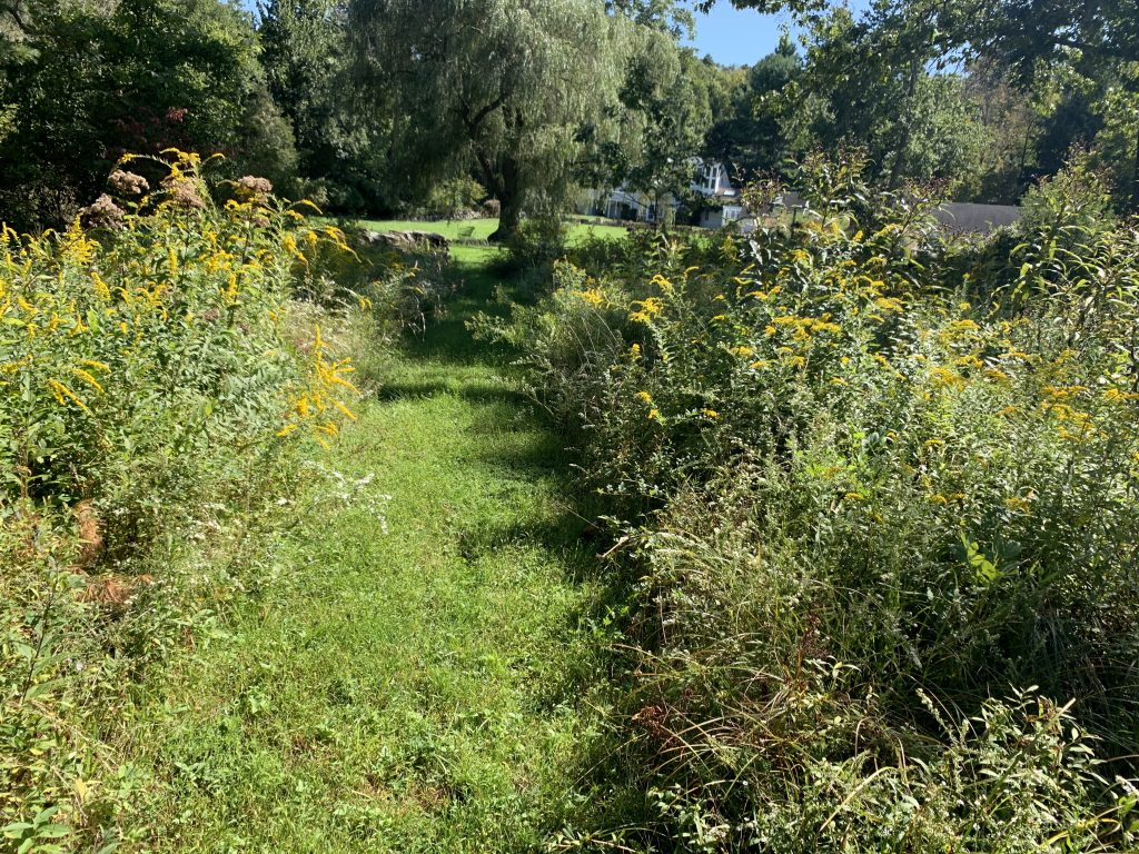 Organic Meadow Management | Westchester, NY