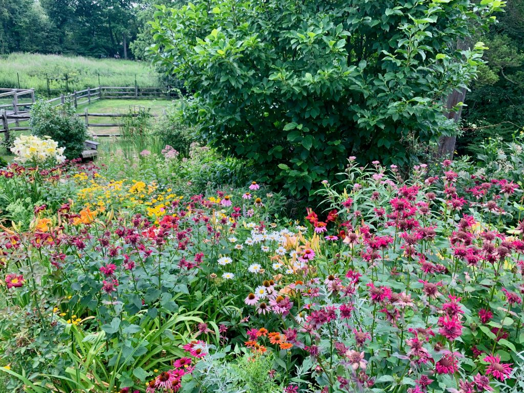Our Favorite Native Perennials for NY, CT & NJ [pt. 1]