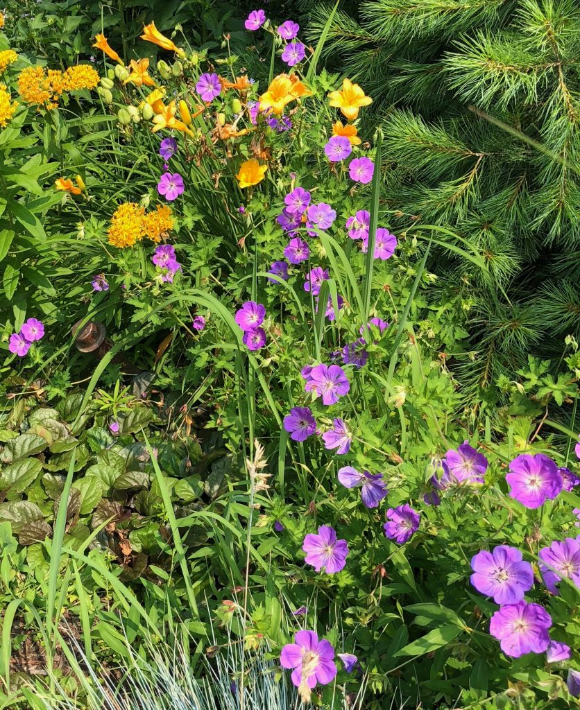 The Best Native Perennials for NY, CT & NJ [pt. 2]
